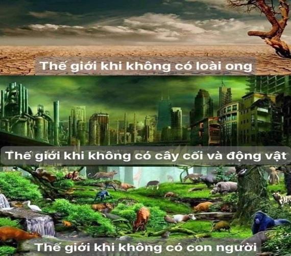 Tap chi Nghien cuu Phat hoc Phan tu sinh thai qua nep song thieu duc tri tuc 1